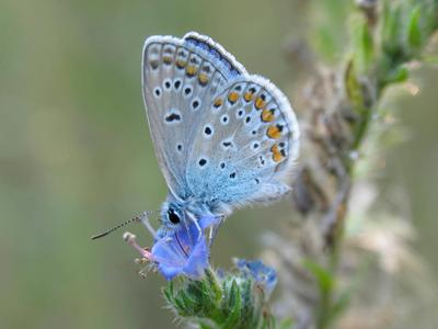 бабочка природа, бабоска