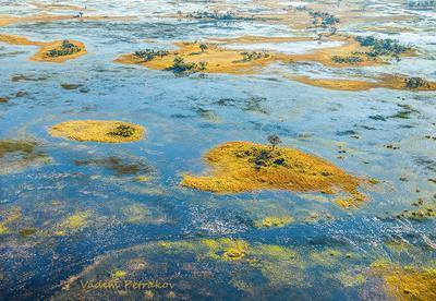 Дельта Окаванго Африка Ботсвана дельта Окаванго вода остров протока животные