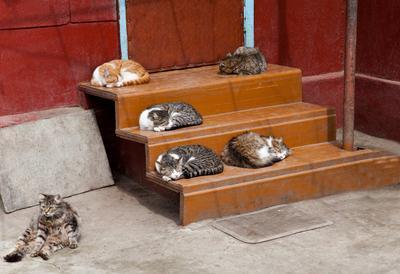 Тихий час Проходил мимо частного сектора и очень был удивлен увиденным лежбищем котиков, особенно левому ряду... Не часто удается застать такой тихий час...