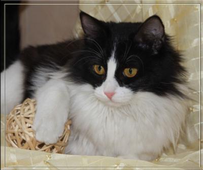 Мишель бездомные животные, кошка, черно-белая кошка