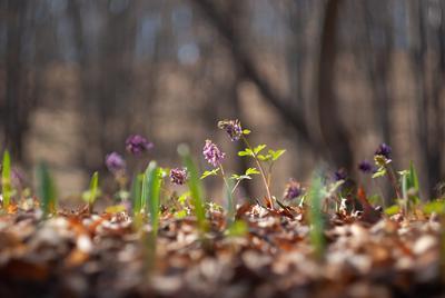 *** была  весна ***