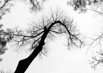 Осенний иероглиф Осень ноябрь дерево иероглиф Петергоф