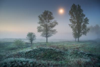 Лунные сумерки ночь утро сумерки туман поле деревья весна лето паутина трава