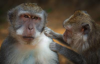 Из жизни приматов...