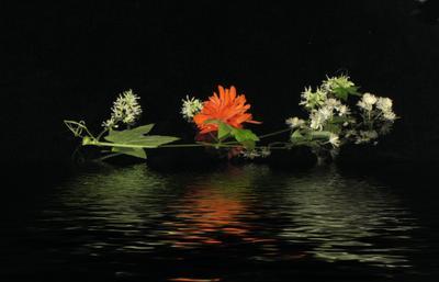 ТАРАНТЕЛЛА Танец, тарантелла,Италия, красиво,цветы, вода, река