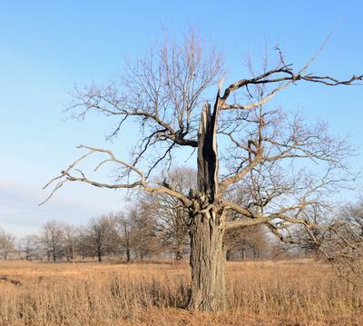Дуб деревья заморозки дубы старый