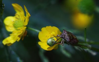 Никому не чуждо красивое Лето цветок клоп