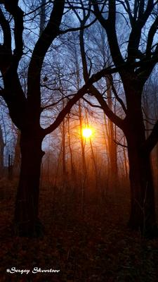 Туманное утро Утро осень туман парк
