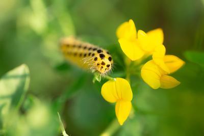 *** макро гусеница желтый цвет пятнистый природа фауна крупным планом