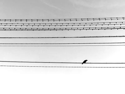 """Salt""( note) Птицы минимализм ноты"