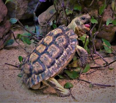 Вкусно! Природа черепаха лакомится листьями