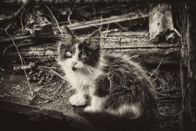 Котик потерялся котенок потерялся