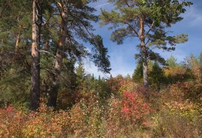 Уголок осеннего склона Склон лес сосны деревья листья краски осень облака