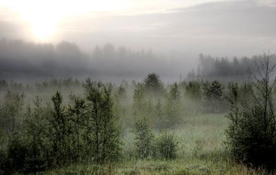 Morning Mist Valday, Russia, Morning. Mist