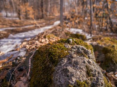 Камень с мхом камень мох природа снег зима