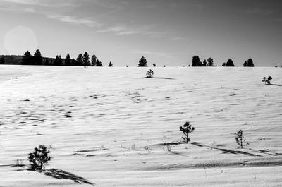 Зима... зима январь снег деревья белый небо