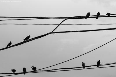 Flying Music music birds wire птицы ноты