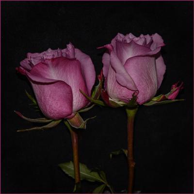 Мы стоим - рука в руке, мы прильнём к щеке щекою... Розы
