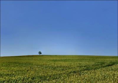 Горизонт горизонт поле небо голубое дерево
