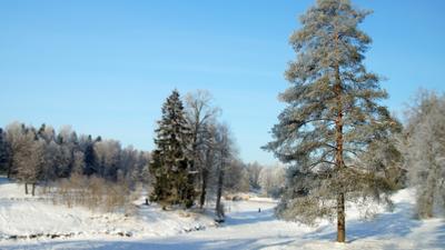 Лесная красавица Павловский парк зима речка лес