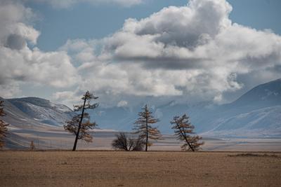танец пейзаж Алтай природа