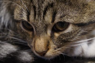 Серьезная Бетти Животные кошки