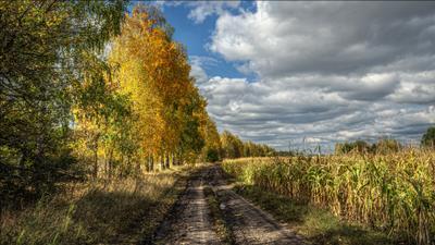 В осень. осень пейзаж