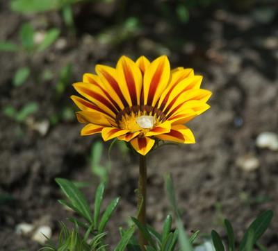 Цветок весна цветок