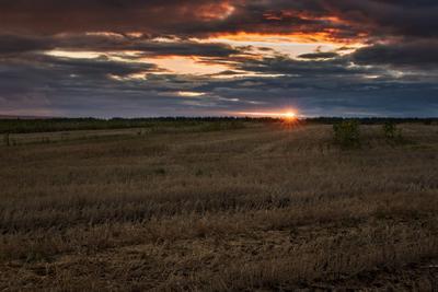 Закат на жниве солнце поле уборочная пшеница колос закат облака вечер тучи