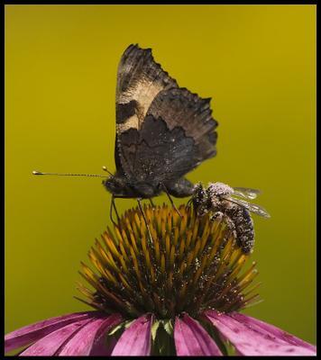 * * * цветок, бабочка, пчела