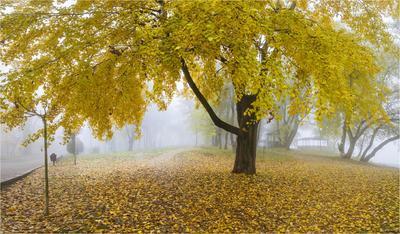 Прощание с осенью.. ноябрь осень листопад