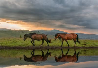 На склоне дня путешествие на Алтай красивые места кони отражение в воде