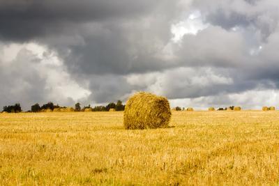 Осень в Марий Эл пейзаж, осень, облака, желтая трава, солома