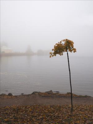 Туман в Петергофе_2