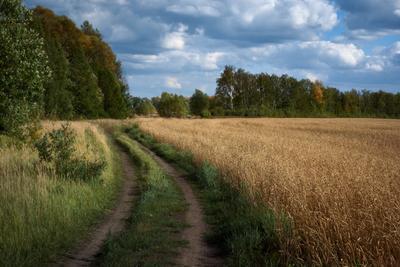 По дорожке в август дорога хлеб уборочная пшеница лес небо облака август