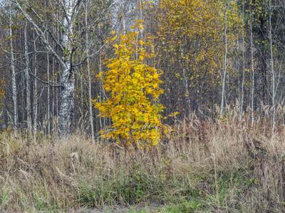 Теплый октябрь 3 лес клён цвет