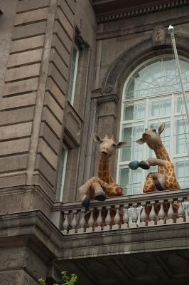Наблюдатели жираф Хельсинки