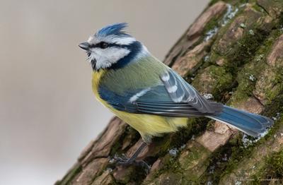 Лазаревка Лазаревка птицы природа зима