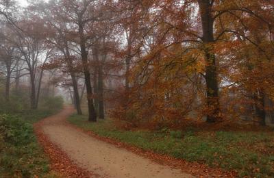 осенняя пора осень листья деревья краски парк