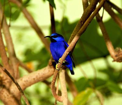 bird природа зоопарк животные в неволе птици