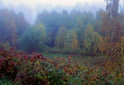 Утро туманнное туман осень