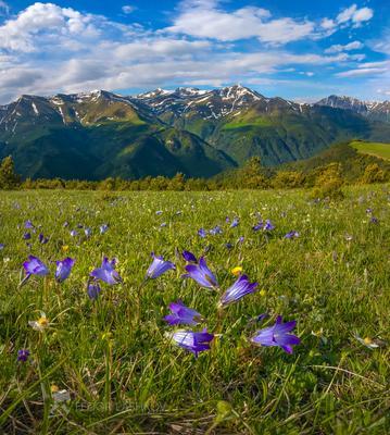 Колокольчики в Архызе! Горы гора Архыз альпийские луг колокольчик цветы цветущие луга цветок весна в горах облака Северный Кавказ вершины