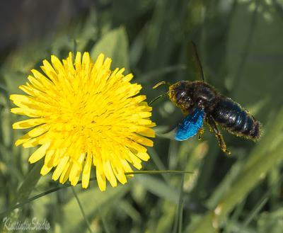 Чудо-юдо..На посадку! чудо-юдо жук одуванчик посадка май весна
