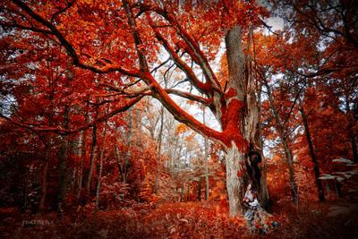 В лесу. лес девушка осень мечта красота