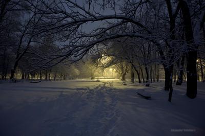 вечер в парке вечер парк снег зима комсомольск на амуре пурга