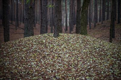 Листопад Лес осень