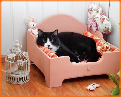 *** кот котик кровать отдых