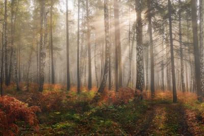 Осенний лес осень лес туман рассвет