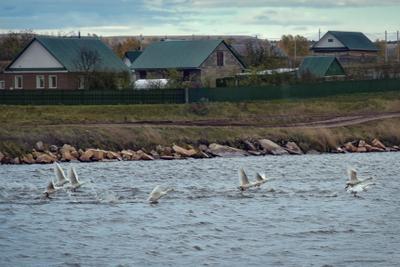 Осенний марафон осень деревня пруд гуси