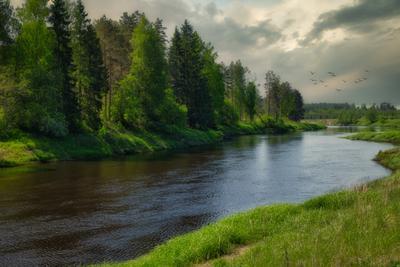 Река Плюсса река лес берег небо Псковская область